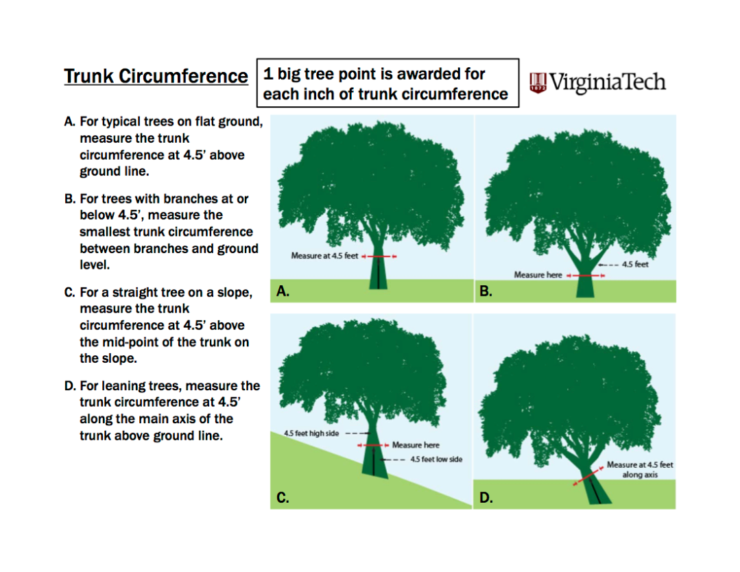 Coordinated By The Department Of Forest Resources And Environmental Conservation At Virginia Tech We Are A Passionate Community Tree Enthusiasts